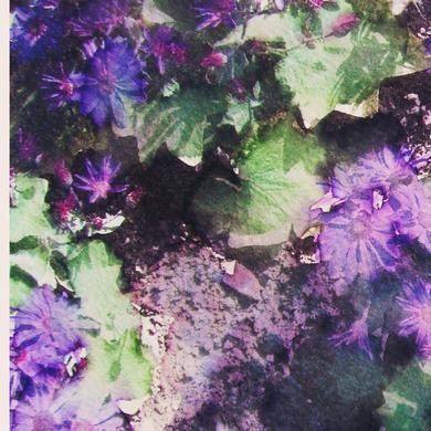 Flores lilas.jpg